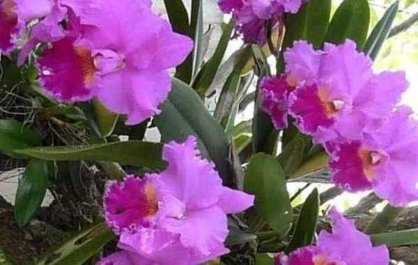 Linda orquídea!