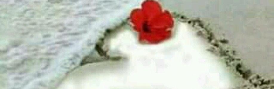 Elaine Amaral Cover Image